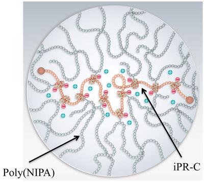 図8.NIPAとiPR-Cのみからできた高分子ゲル内の電荷の様子